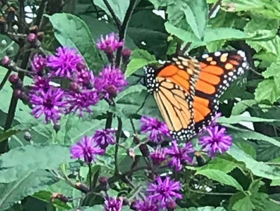 Gardening for Pollinators: Resources and Plant List