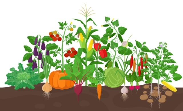 Gardening For Life – Vegetable Gardening