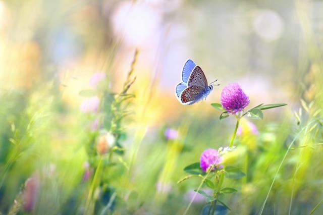 Gardening for Wildlife: Resources & Plant List