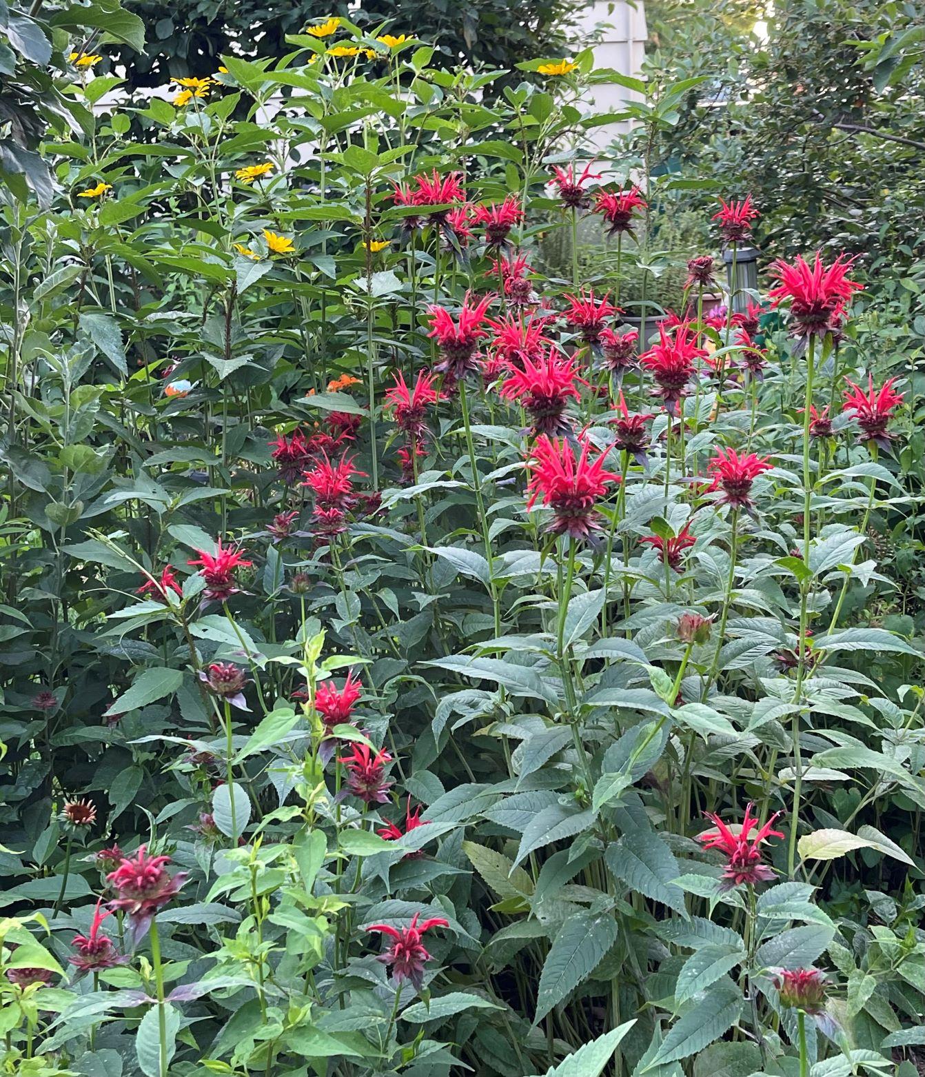 Favorite flowers, season by season